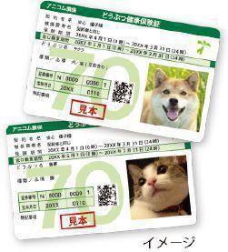 ペット保険サンプル